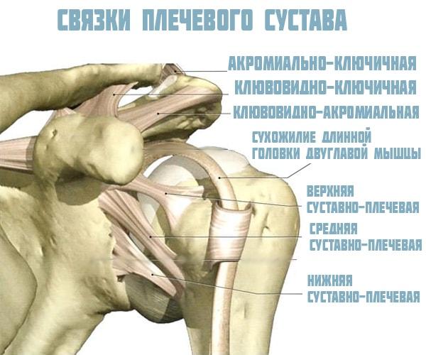 a vállízület elmozdulása aloe kezelés ízületi fájdalmak kezelésére