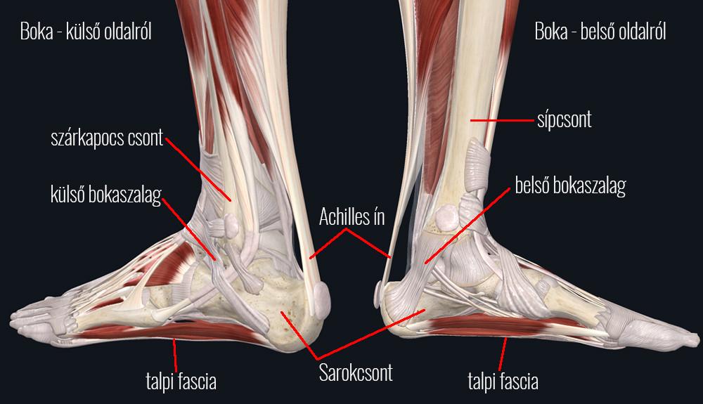 boka csont fájdalom miért fáj a térdízületi kezelés
