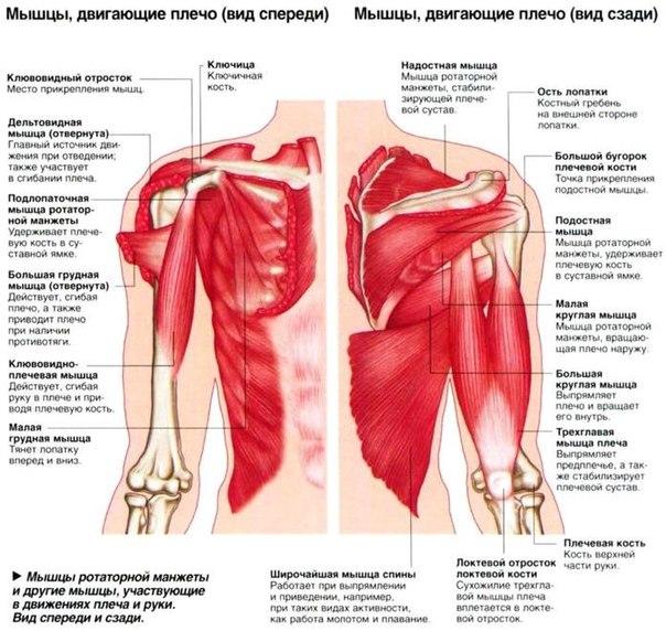 dimexid vállfájdalommal tömöríti)