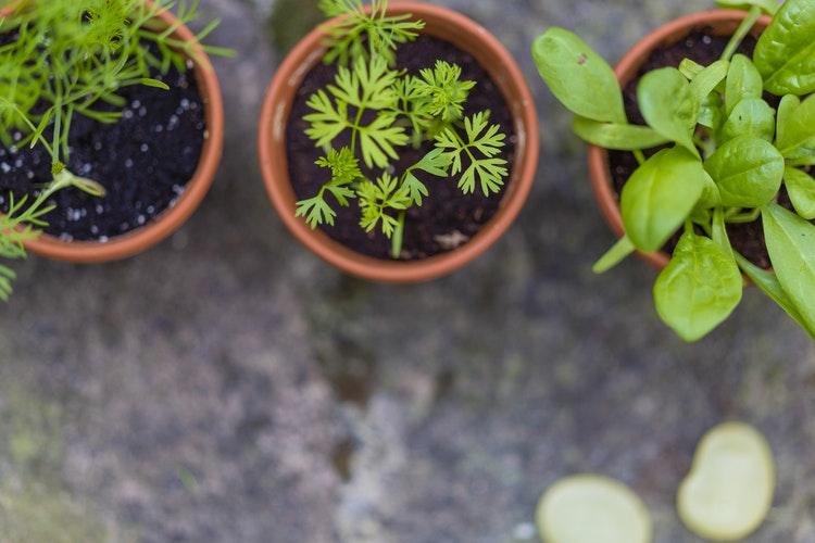 Milyen gyógynövényekkel gyógyítsuk az ízületi gyulladást? - Wellness - Élet + Mód