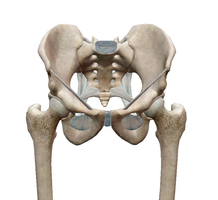 az alsó hátfájást az izületek adják