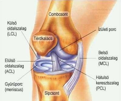 hogyan kezeljük a térd kezdeti artrózisát