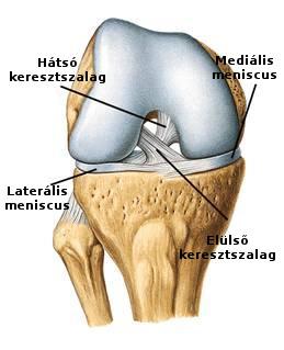 meniszcus térddegeneratív kezelés)