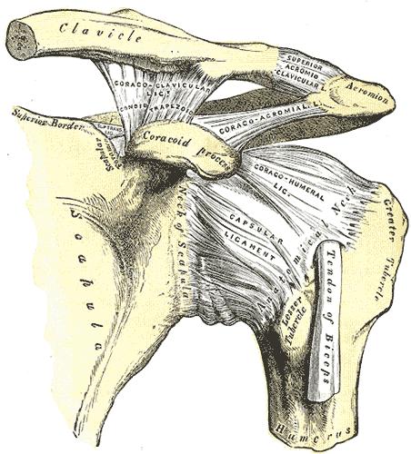 acromioclavicularis ízületi arthrosis)
