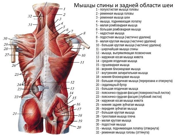 a csípőízületek izmai fájnak