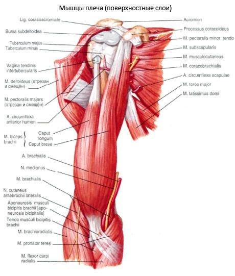 a térdfájdalom blokádja