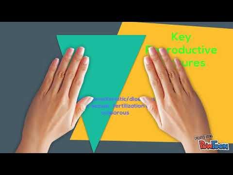 DZHVP hipokinetikus típus: tünetek, megelőzés, kezelés - Receptek