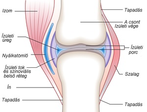 térd és csípő artrózisa