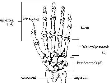 könnyező fájdalom a kéz ízületeiben