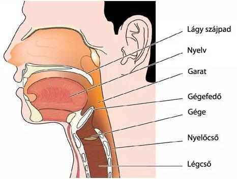 tüszős torokgyulladás kezelése házilag kiterjedt artrózis és kezelés