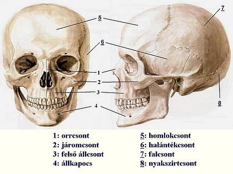 ízületi fájdalom és csontozat torna térdfájdalomtól