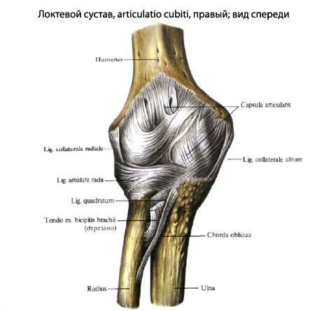 artritisz könyökízületek