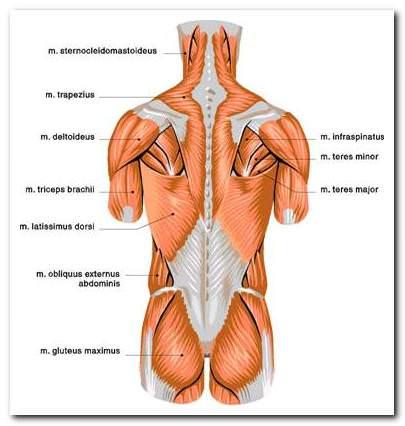 a hát alsó része fáj, az összes ízület baloldali nyakfájás okai