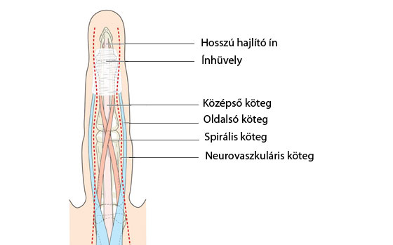 távolítsa el az ujjak ízületeinek fájdalmát)