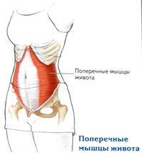 fájdalom a csípőízület izmain)