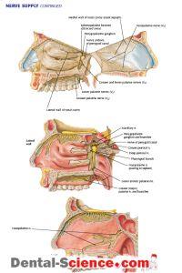 fájdalom perineum ízület