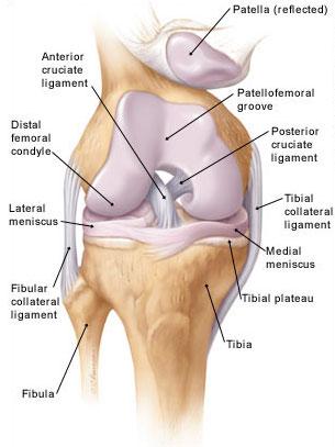 térdízület külső ligamentum sérülése)