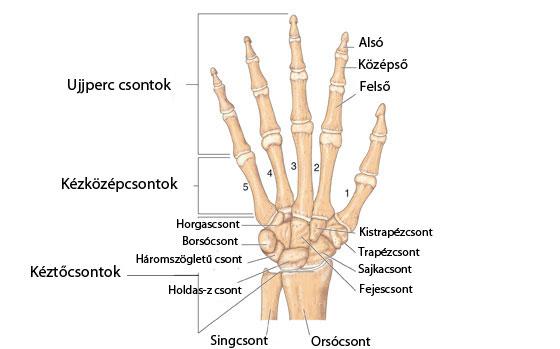ízületi fájdalom és csontozat hogyan lehet helyreállítani az ízületeket rheumatoid arthritisben