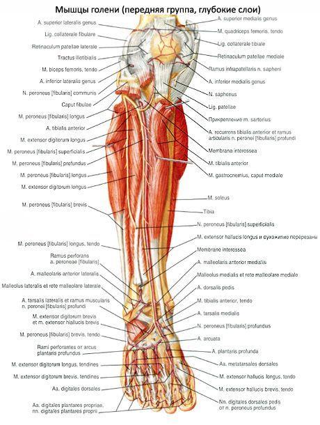 a lábak ízületei a medence területén