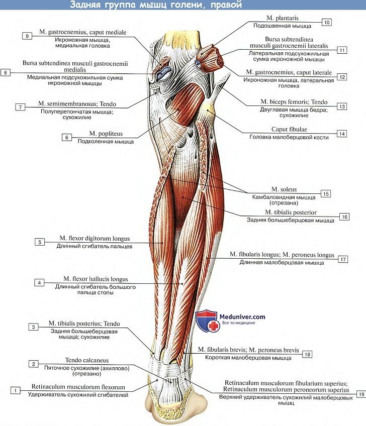a térd deformáló artrózisa 2 fok