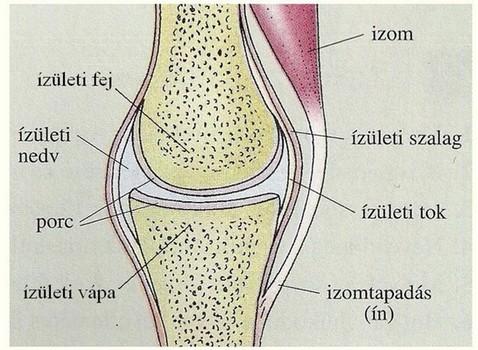 a lábak csontok és ízületek betegségei
