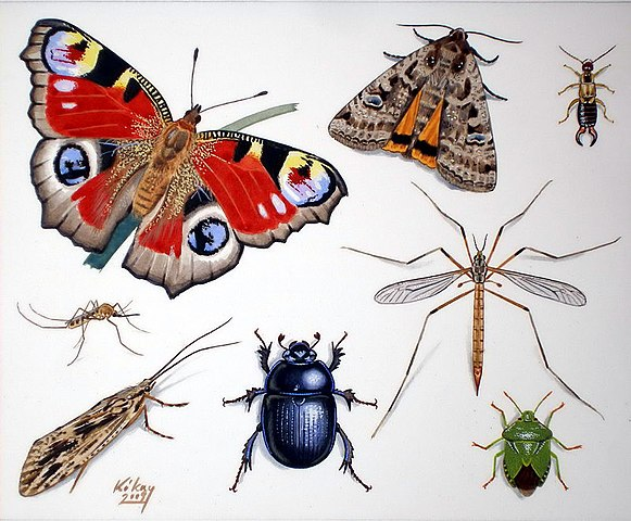Szuper rovarok - A legnagyobb, leggyorsabb és legveszélyesebb ízeltlábúak a Földön