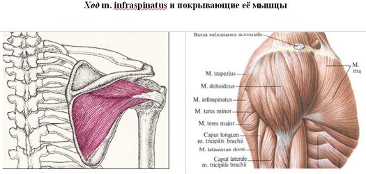 a térdízület 1. szakaszának deformáló artrózisa csonti és ízületi fájdalom serdülőknél