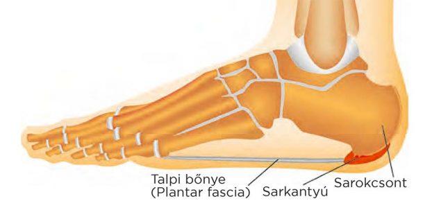 a lábízület fáj és sarok