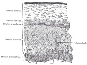 kötőszövet szerkezete típusú porc)