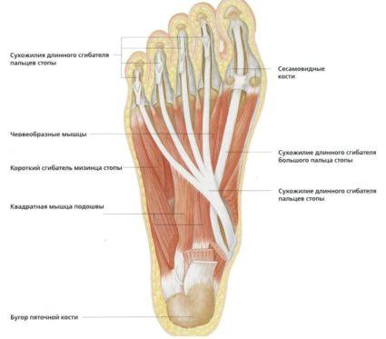 fáj a bal láb nagy lábujjában lévő ízület)