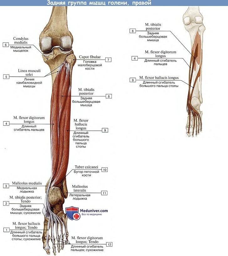 fájdalom a jobb láb lábának ízületében