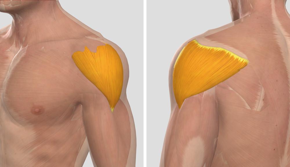 a vállízület artrózisának kezelése otthon)