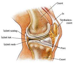 csontritkulás a térdízület 1-2 fokos)