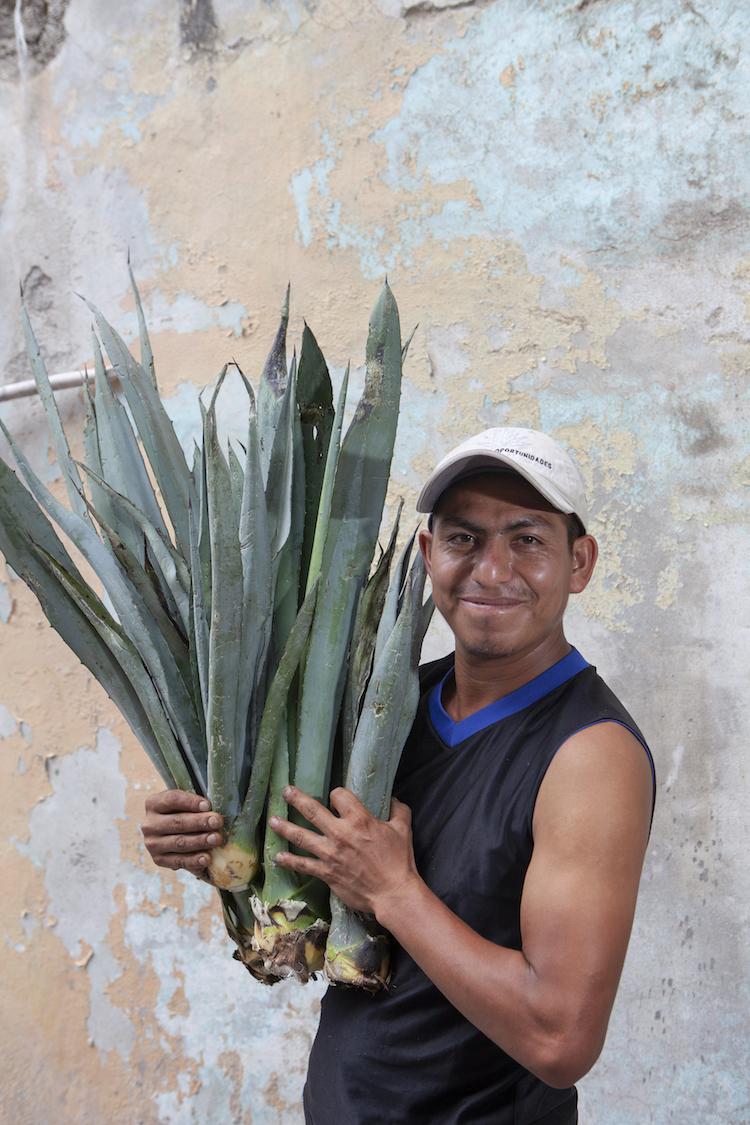 agave arthrosis kezelés)