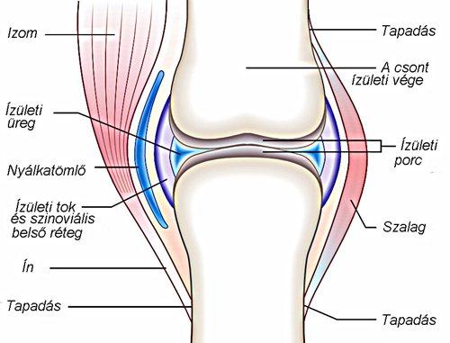 térdízületi ízületi fájdalom a térd alatt)