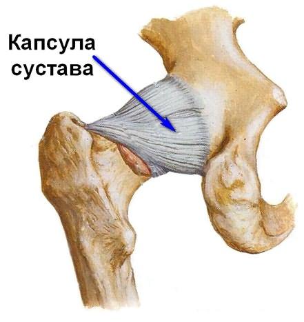 hogyan erősíthető meg a csípőízület kötőelemei sérülés után)