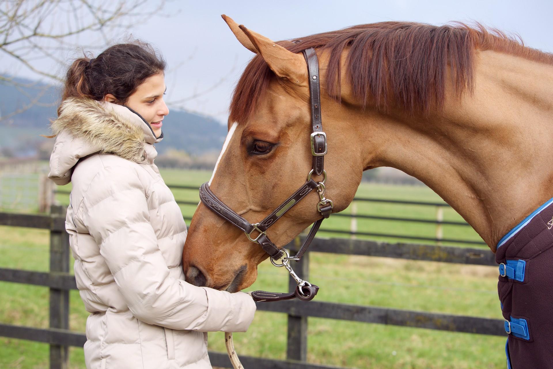 ló gél közös áttekintések)