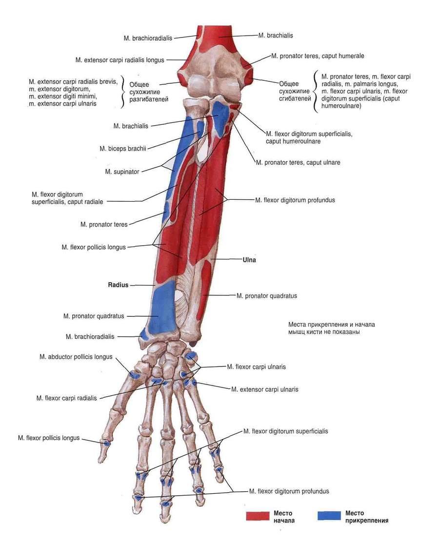 ki kezeli az ízületi gyulladást és az ízületi gyulladást a bal kéz ízületének fájdalma kezelést okoz