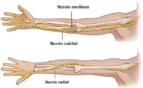 Perifériás idegsérülések rehabilitációja