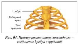 egy kötőszövet réteg, amely a porc felületét takarja