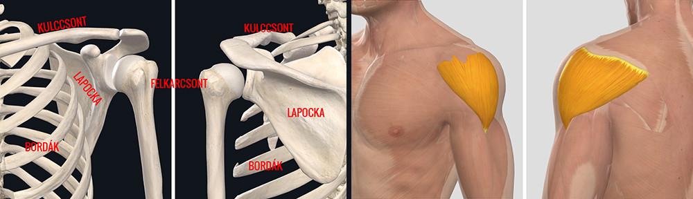 a jobb vállízület supraspinatus izomjának inakárosodása