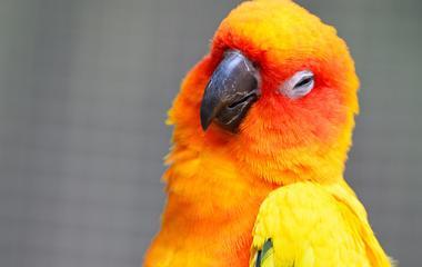 ízületi gyulladás papagájban a lábujjízület kezelésének deformációja