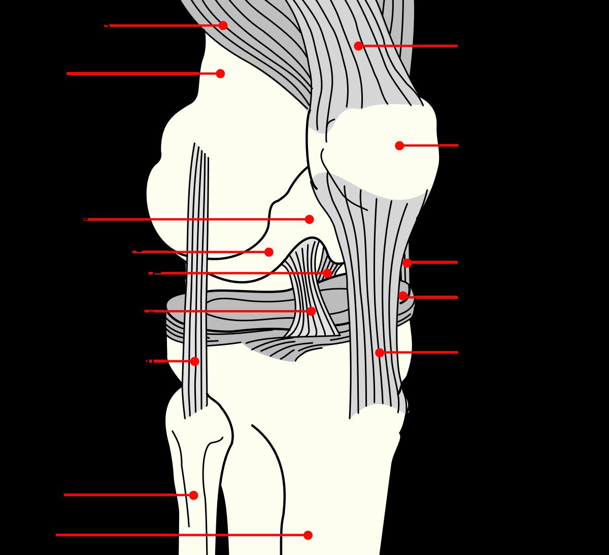 a csípőízület patella fájdalma