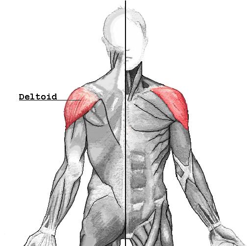 a vállízület clavicularis artrózisa