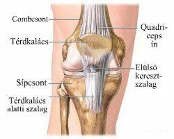 hogyan lehet kezelni a térdízület oldalsó ligamentumát)
