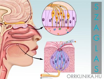lábízület duzzanata az orrban és fájdalom