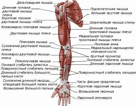 vízszintes sáv vállízület artrózisához)