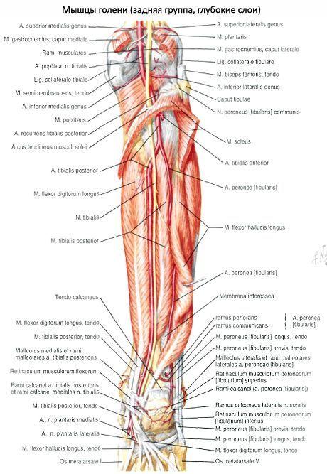 csontfájdalom a láb ízületén