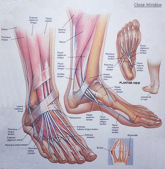 a nagy lábujjak ízületei fájni kezdtek