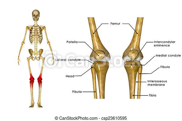 Térdkalács fájdalom kezelése | Harmónia Centrum Blog